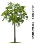 Green Tree Isolated Against A...