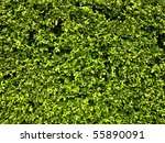 Abstract Nature Background Of ...