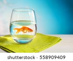 Goldfish In A Round Glass Of...