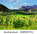 madagascar landscape | Shutterstock . vector #558929731
