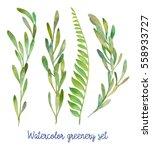 watercolor greenery set. hand... | Shutterstock . vector #558933727