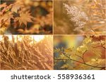 collage of beautiful autumn... | Shutterstock . vector #558936361