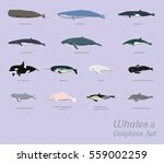 Whales And Dolphins Set Cartoo...