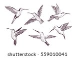 hummingbird vector pattern | Shutterstock .eps vector #559010041