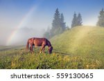 A Horse Grazes In The Fog In...