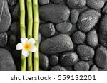 frangipani flower and bamboo on ... | Shutterstock . vector #559132201
