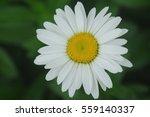 white daisy on green background | Shutterstock . vector #559140337