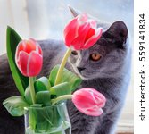 a nice grey cat sniffing and... | Shutterstock . vector #559141834