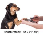 Cutting Her Small Dog Claws