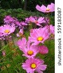 Macro Photo Gentle Air Pink...