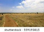 african savannah landscape.... | Shutterstock . vector #559193815