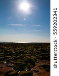 Small photo of Landscape of the coast with stones covered with silt and the sun facing