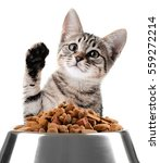 Stock photo cute kitten and bowl with dry food on white background 559272214