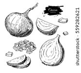 onion hand drawn set. full ... | Shutterstock . vector #559282621