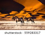 Oryx And Dunes   Sossusvlei  ...