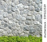 gray stone wall and green tree... | Shutterstock . vector #559322539