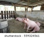 pig farm in countryside | Shutterstock . vector #559324561