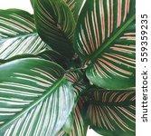 beautiful green leaves | Shutterstock . vector #559359235
