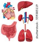 different organs of human...   Shutterstock .eps vector #559385119