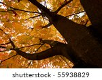 Fall Branches Of Tree