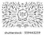 Stock vector hand sketched vector vintage elements laurels leaves flowers swirls and feathers wild and 559443259