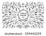 hand sketched vector vintage... | Shutterstock .eps vector #559443259
