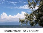 Small photo of tree,leaf,bough,clouds,sky,azure,air,welkin,clouds and sky,tree and sky