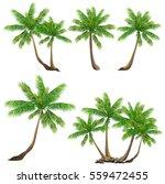 coconut palm tree  cocos...   Shutterstock .eps vector #559472455