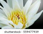 Close Up Pollen White Water...