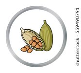 cocoa fruit icon in cartoon... | Shutterstock .eps vector #559490791