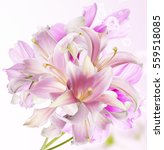 beautiful lily.pink bouquet | Shutterstock . vector #559518085