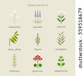 herb healing leaf grass nature... | Shutterstock .eps vector #559518679