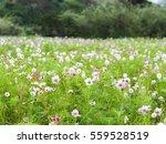 flower   Shutterstock . vector #559528519