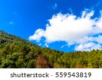 forest trees and blue sky   Shutterstock . vector #559543819