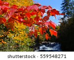 Colorful Trees And Leaves In...