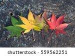 Beautiful Colorful Of Autumn...