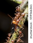Small photo of A group of ants having meals
