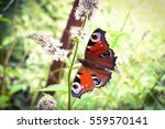Butterfly On Pepper Mint Flower