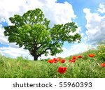 Big Green Tree And Red Poppy