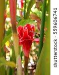 Small photo of Ginger flower