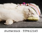 Kitty With A Sleeping Cap On A...