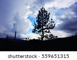 portrait of tree on the sky | Shutterstock . vector #559651315