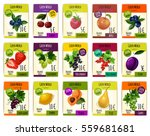 fruits price cards. vector set... | Shutterstock .eps vector #559681681