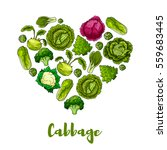 cabbage vegetables designed of... | Shutterstock .eps vector #559683445