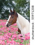 Portrait Of Nice Horse In The...