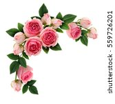Stock photo pink rose flowers and buds circle arrangement isolated on white flat lay top view 559726201