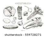 collection of hand drawn... | Shutterstock .eps vector #559728271