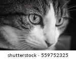 cat | Shutterstock . vector #559752325