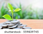 young plant growth concept for...   Shutterstock . vector #559839745