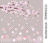 realistic sakura japan cherry...   Shutterstock .eps vector #559843111